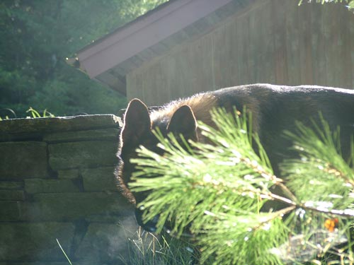 Young dog behind tree, peering at owner