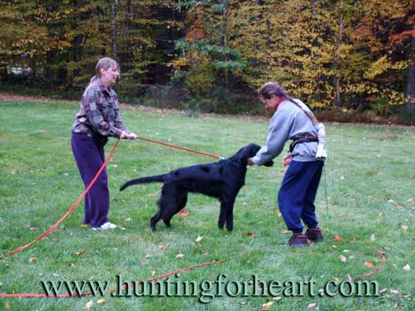Natural Dog Training food and pushing beginning