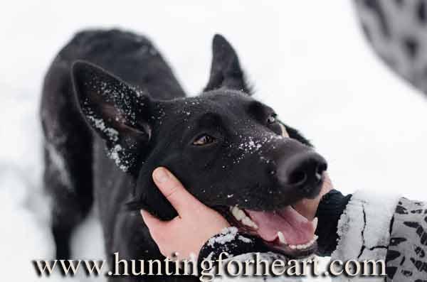 Abused dog behavior turns to trust