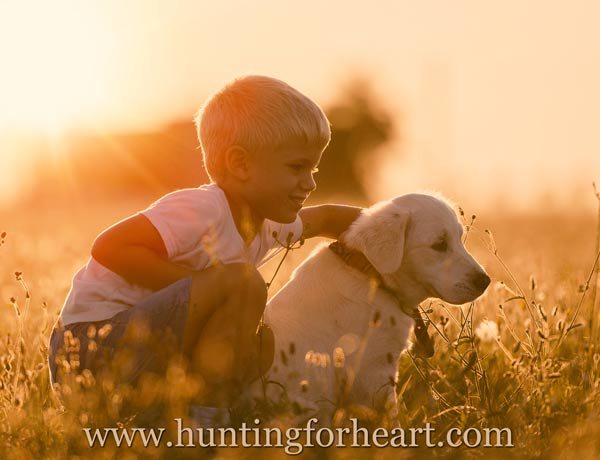 Puppy socialization - Golden Retriever pup with young boy