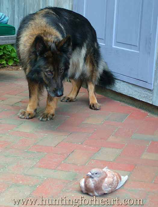 Ena and pigeon meet each other