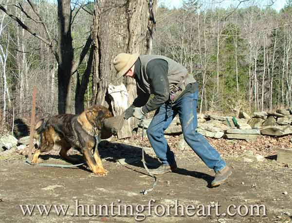 Natural Dog Training originator Kevin Behan playing tug with dog.