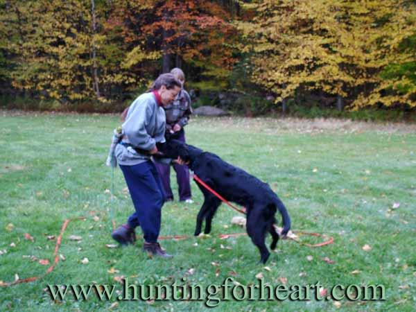 Natural Dog Training food and pushing progress
