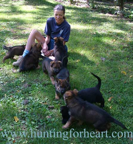 puppy socialization with litter of German Shepherd pups